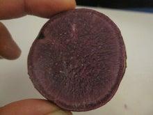 $農に学ぶ。-【お土産の紫イモ】