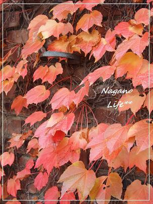 Nagano Life**-秋