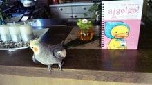 オカメインコのももちゃんと花教室と旅日記-111113_084652.jpg