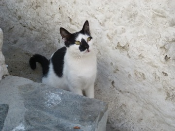 ミコノスのネコ1