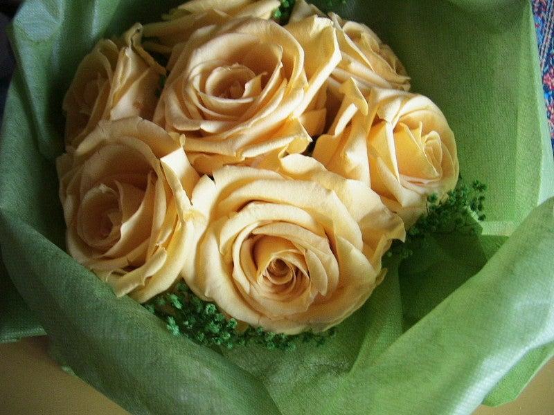 おまけ道@琵琶湖畔で実家生活♪ポテチンっ♪-黄色バラ