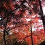 京都へ行こう。