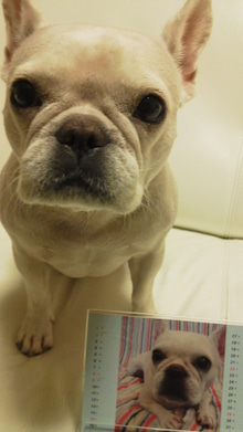 藤田朋子オフィシャルブログ「笑顔の種と眠る犬」Powered by Ameba-2011111416380001.jpg