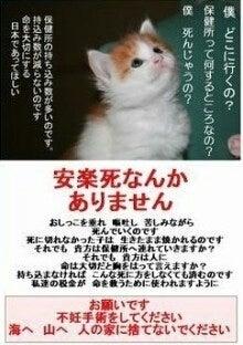 $犬猫の避妊去勢手術の費用を助成する自治体(画像に出てこなくても、譲渡可能な猫や犬もいます)