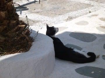 迷路のネコ2