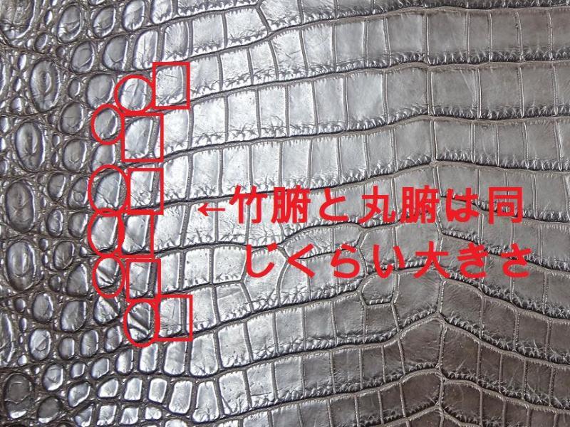 CrocodileShopGaudieのブログ
