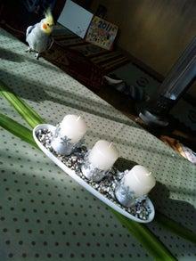 オカメインコのももちゃんと花教室と旅日記-111116_084457.jpg