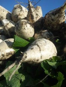 京都上賀茂の農家の『京野菜を育てて販売している粋なブログ』-DVC00018.jpg