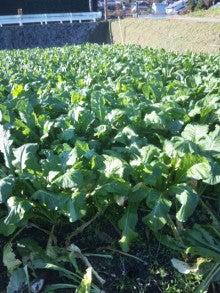 京都上賀茂の農家の『京野菜を育てて販売している粋なブログ』-DVC00016.jpg