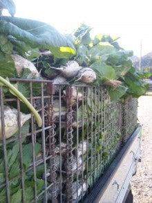 京都上賀茂の農家の『京野菜を育てて販売している粋なブログ』-DVC00019.jpg
