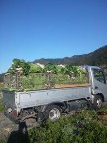 京都上賀茂の農家の『京野菜を育てて販売している粋なブログ』-DVC00017.jpg