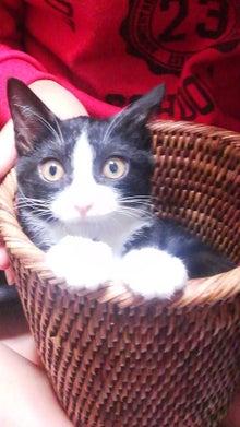 タイの日本人-タイの日本人 シングルファザー 捨て猫