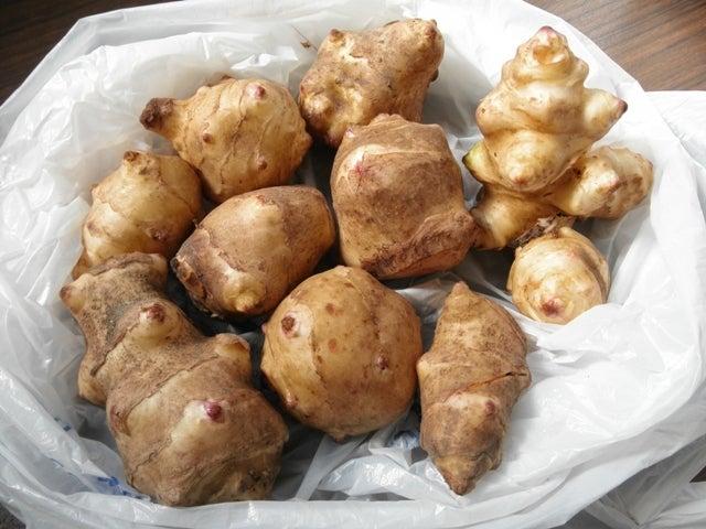 大好き☆ベランダ菜園-菊芋の種芋