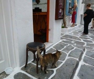 高級ネコに導かれる