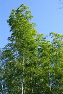 毎日はっぴぃ気分☆-蒼空と竹林