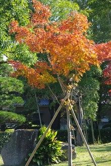毎日はっぴぃ気分☆-一本木の紅葉
