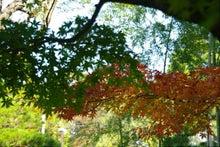 毎日はっぴぃ気分☆-緑と紅葉の共演