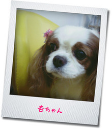 $One Carat JAPAN