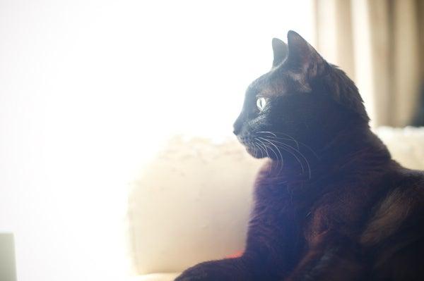 $黒猫アコ様