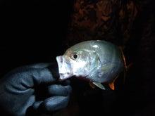 沖縄から遊漁船「アユナ丸」-H23.11.05