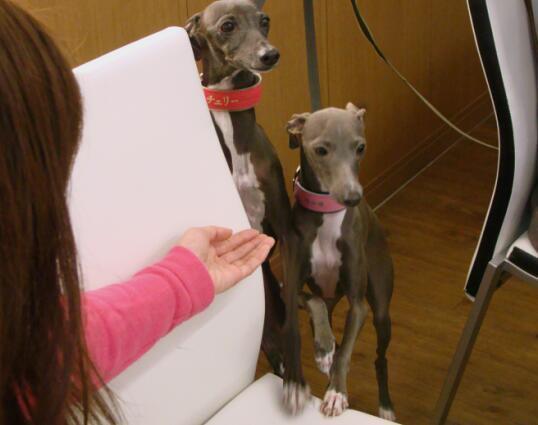 inubakaのブログ-チェリーちゃんとモニカちゃん