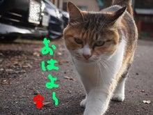 一姫虎太郎日記