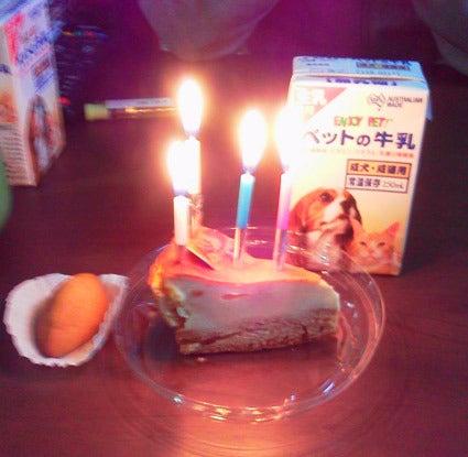 真っ黒しっぽっぽ-お誕生日♪