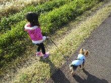 北斗の犬-2011112213440000.jpg