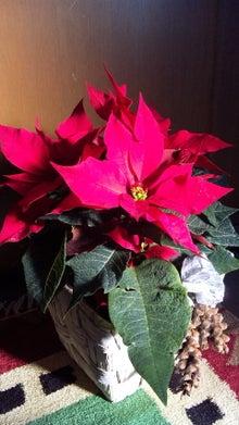 オカメインコのももちゃんと花教室と旅日記-111123_083736.jpg