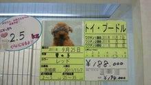 DOGPLEX店長のBLOG-2011112316460001.jpg