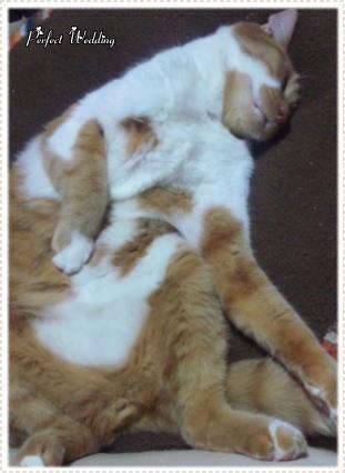 【パーフェクトウェディング宣言!】-猫の写真