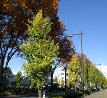 マロンベアの熊谷まち歩き