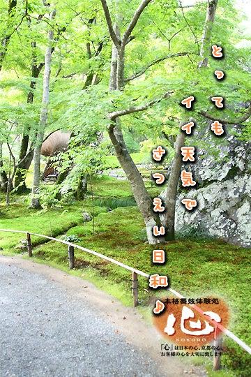 京都舞妓体験処『心』 スタッフブログ-chukyo04