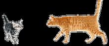 猫惑星日誌
