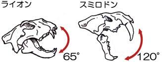 川崎悟司 オフィシャルブログ 古世界の住人 Powered by Ameba-スミロドンの顎の開閉