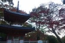 サクラのブログ-DSC_0295.JPG