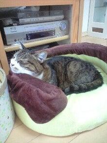 ずれずれブログ…湘南で猫と暮らせば…-111128_0915~0001.jpg