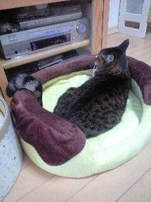 ずれずれブログ…湘南で猫と暮らせば…-111128_0905~0001.jpg