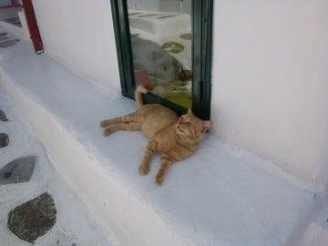 店番中のネコ