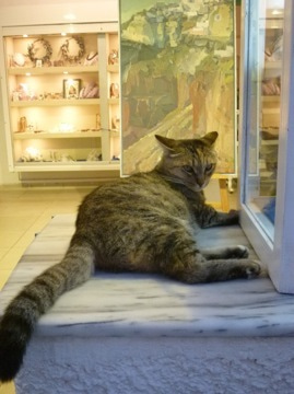 サントリーニのネコ