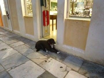 サントリーニのイヌ