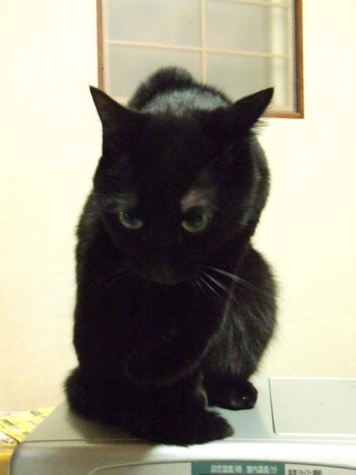 ネコに真珠・豚にゴハン-「お控えなすって!」
