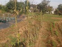 alata farm
