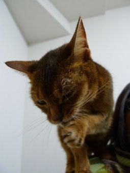 きょうも猫日和