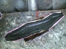FRP,カーボン パーツ製作・販売のSilky Shark Project よっすぃ~の日記