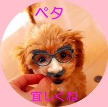 トイプードル☆テディのブログ