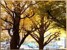 Kirin's Cafe  Style  /  カフェ・雑貨・グルメ & 街歩き-神宮 銀杏景色1