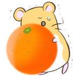 笑顔になれる場所-ハムスター オレンジ
