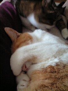 ずれずれブログ…湘南で猫と暮らせば…-111209_1233~0001.jpg