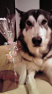 ウチのお犬様♪-20111211135001.jpg